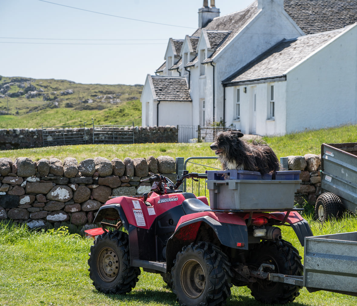 Farm Dog, Isle of Iona